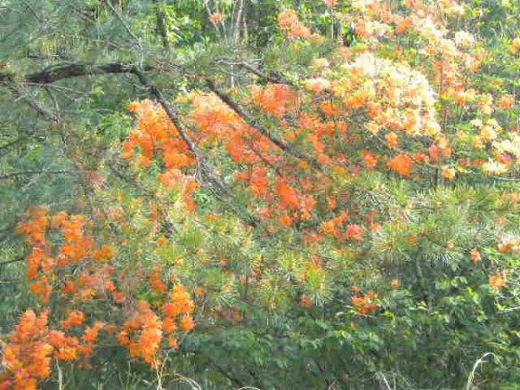 Brush Creek fall