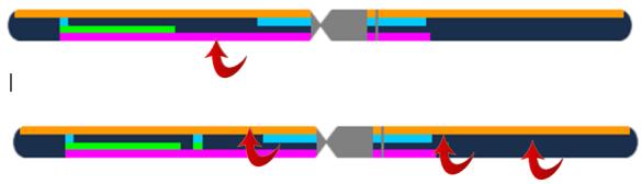 4 gen chr 1 no transmission