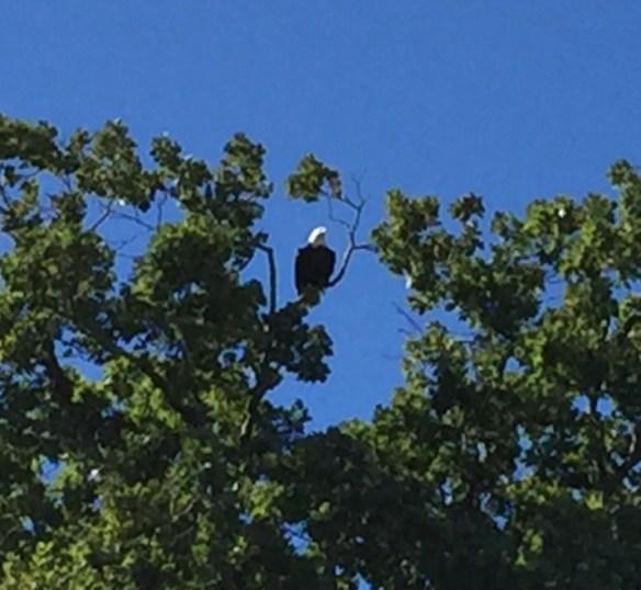 Combs wife eagle
