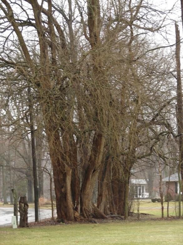 David Miller boundary trees