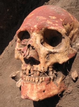 JakobLenz Yamnaya skull