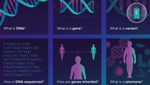 genos23