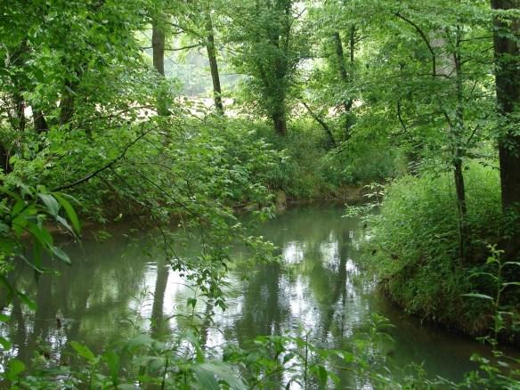 jane-dodson-creek