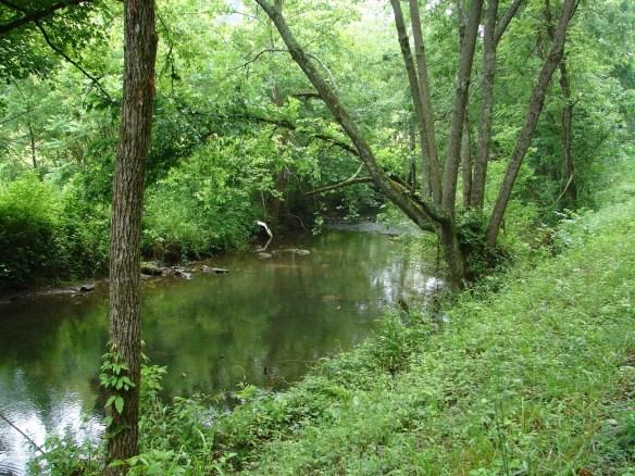 mary-dodson-dodson-creek