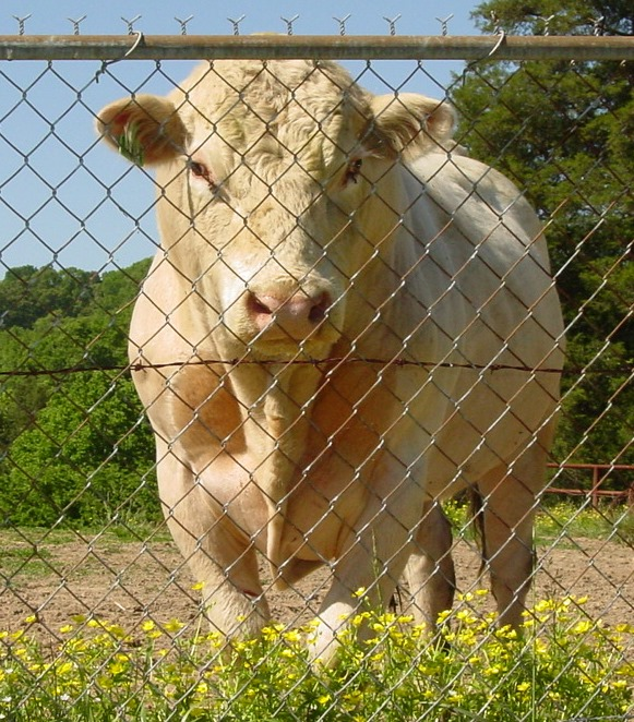 clarkson-cemetery-bull