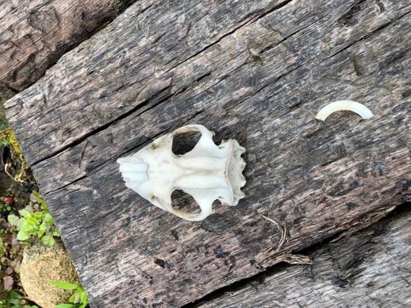 Hiram Ferverda skull.jpg
