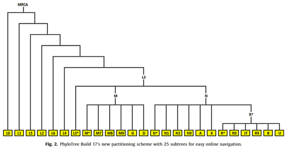 mitochondrial Build 17 tree.png