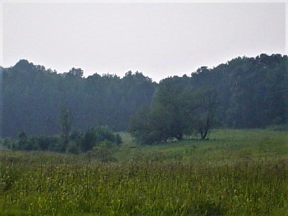 William Moore rolling hills.jpg