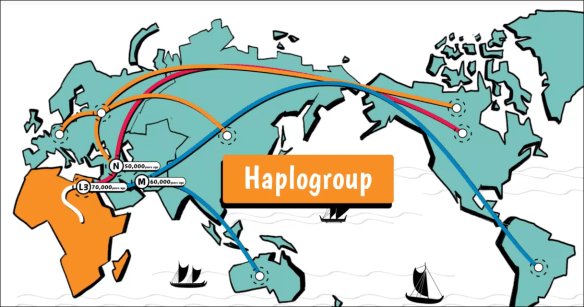 mtDNA journey haplogroup map.png