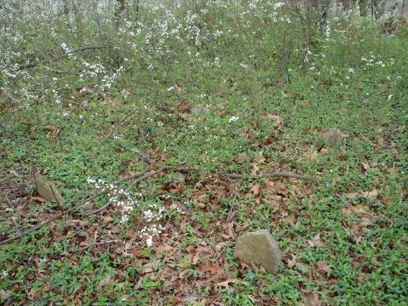 James Moore cemetery 3.jpg