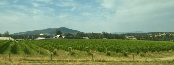 Australia Melbourne vineyard.png