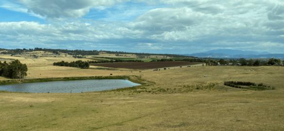 Tasmania farm 2.png