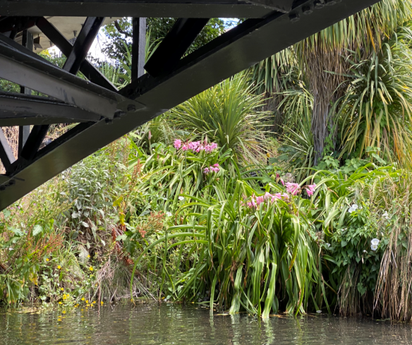 christchurch water flowers.png