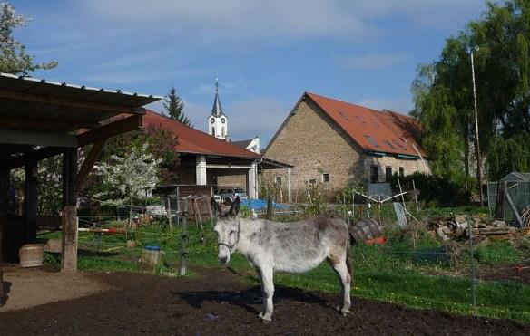 Koob, Fussgoenheim farm