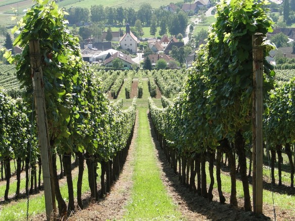 30 vineyard