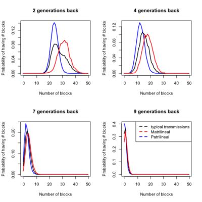 Le nombre de segments hérités selon le sexe et le nombre de générations