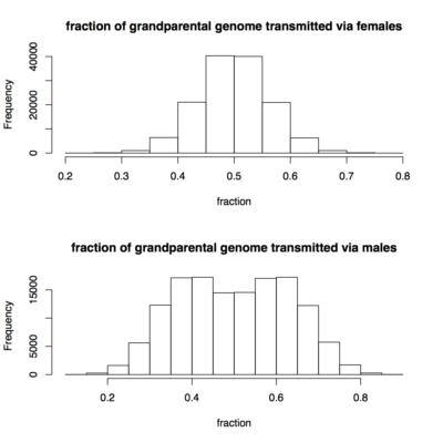 Comparaison de la transmission des chromosomes par le père et la mère
