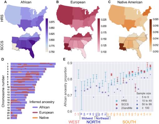 """Répartition de la diversité de l'ADN des afro-américains aux Etats-Unis, avec un gros plan sur le Sud. Exemple de répartition des gènes dans le """"chromosome brower"""" d'un individu."""
