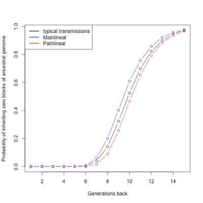 Au-delà de la sixième génération, la probabilité de n'hériter d'aucun segment de chromosome de nos ancêtres augmente.