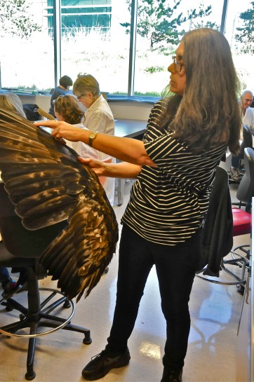 Ildiko with Golden Eagle wing (KB)