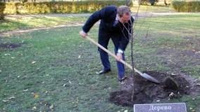 сафронов дерево