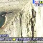 名古屋の早朝 去年より1℃低く!