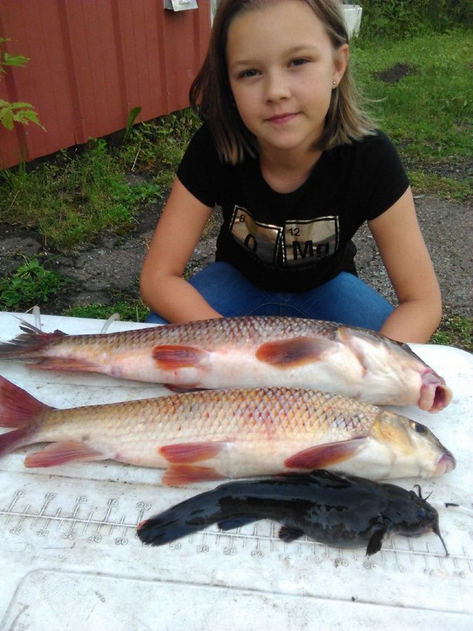 Parker Welch, 12, of Merrill, Wis., set three state fish records on July 4, 2017: for golden redhorse, top; shorthead redhorse, middle; and stonecat, bottom. - Photo credit: Contributed