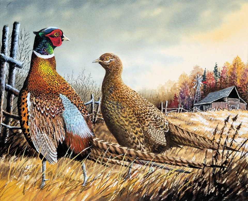 First place Pheasant Stamp: Robert Leum  - Photo credit: DNR