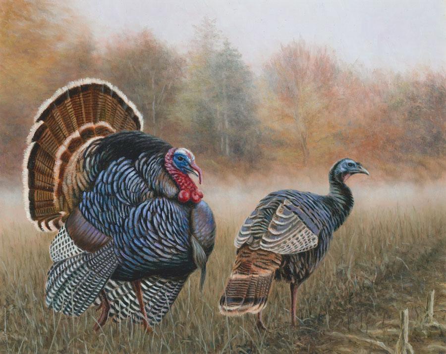 Spring Gobbler Season Pa 2020.Wild Turkey Great Lakes Hunter