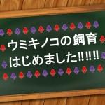 初心者向けソフトコーラル!ウミキノコの飼育はっじめっるよ―!!