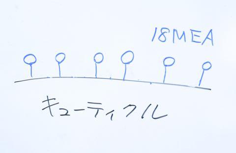 DSC_7604