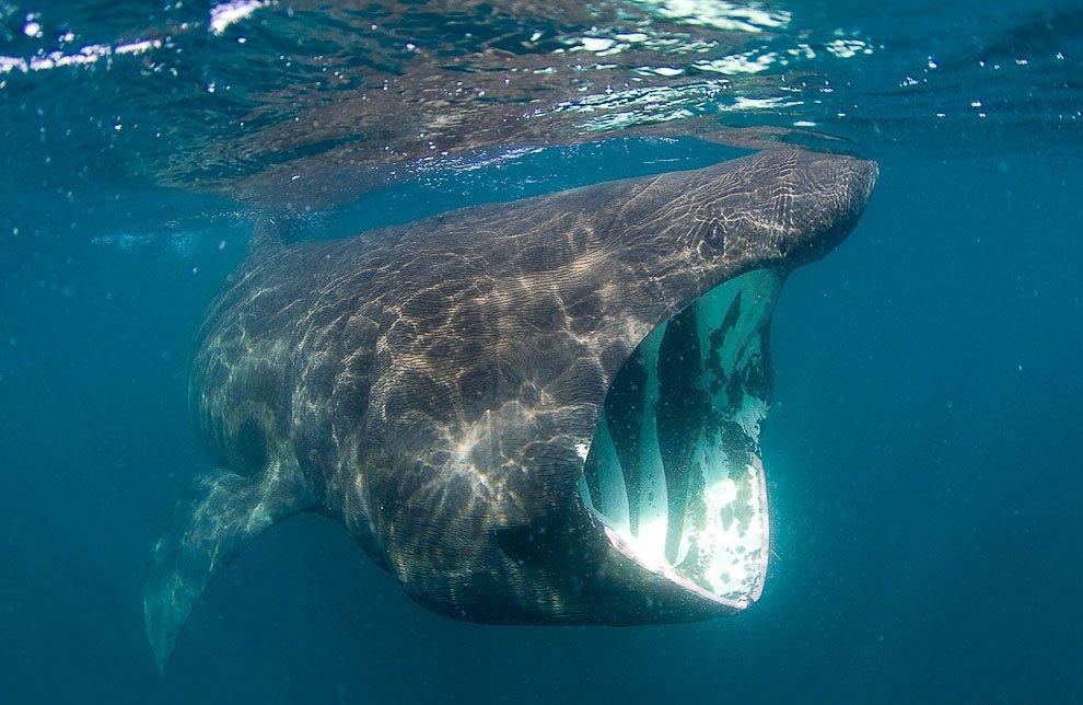 связи самые огромные животные в мире фото это некотором роде