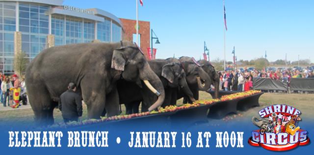 Elephant-Brunch-2015_Web-Feature