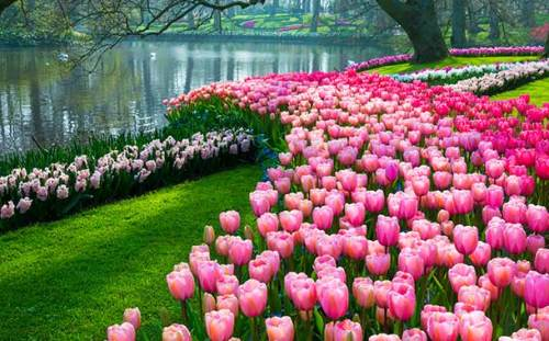 Image result for Botanical Garden – For The Amazing Flower Display