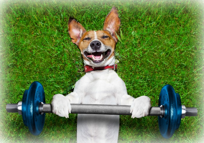 weight-lifting-dog-1