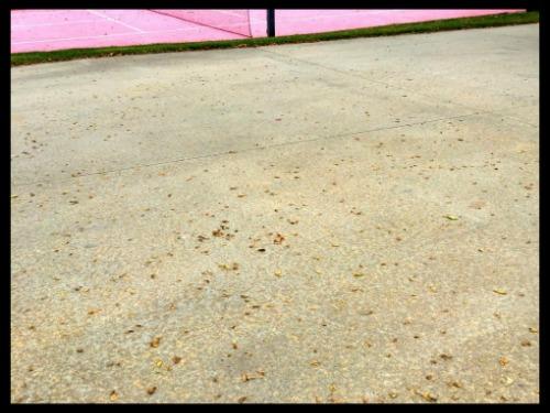 Empty Driveway 2