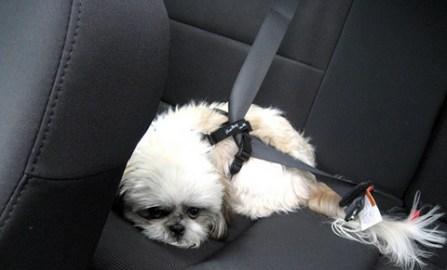 Seat-Belt1
