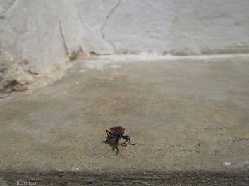Nice to meet you, little fellow!...