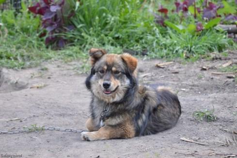cute little fluffy friend :))