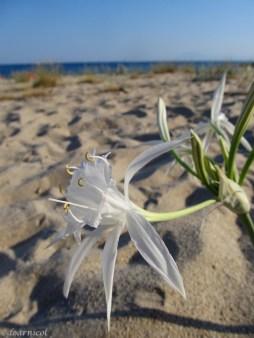delicate white in the breeze