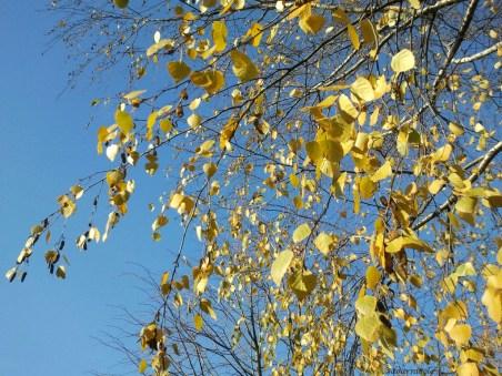 leafy lace