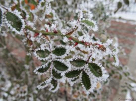 wintry lace