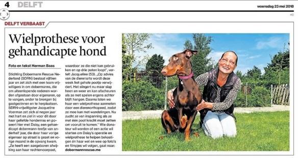 Daisy in de krant1