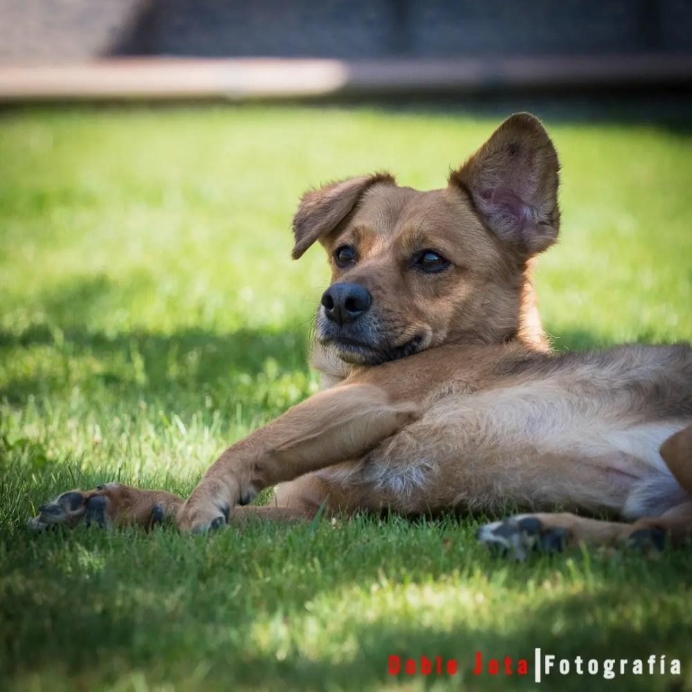Foto de perro hecha con Olympus OMD EM1 Mark II