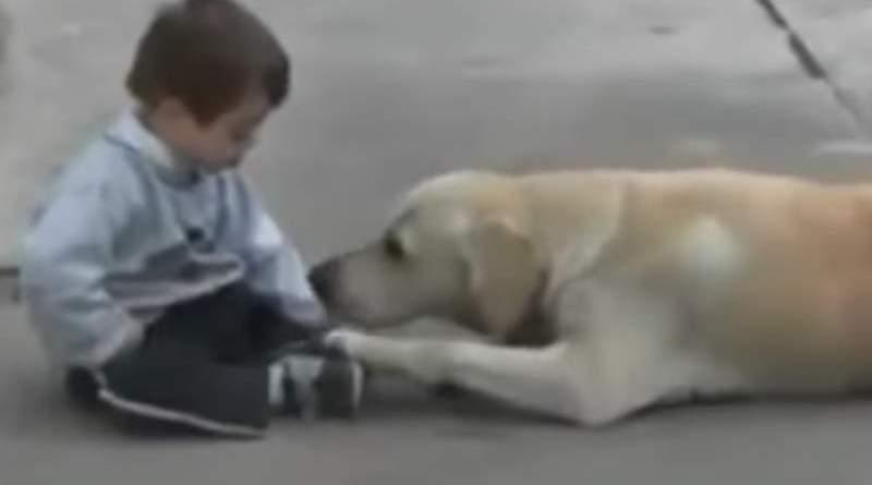 Chory chłopiec, pies i magiczna więź między nimi