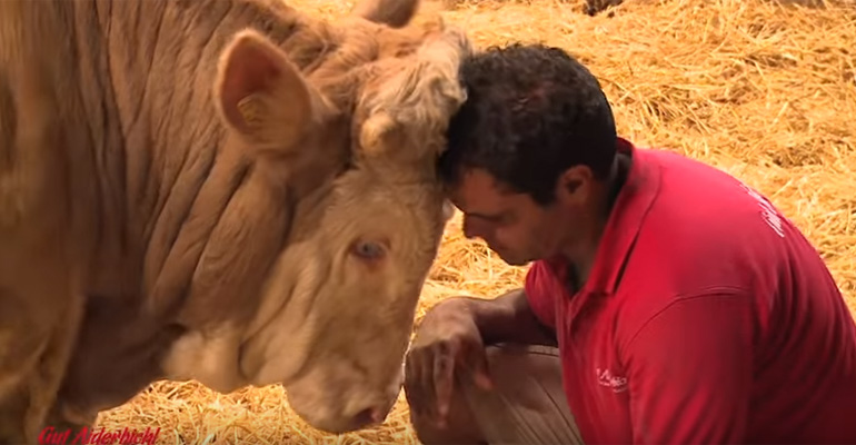 Bandit-the-Bull-Rescued-by-the-Gut-Aiderbichl-Featured