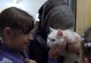 Kunkush – kot, który z Grecji dotarł za swoją rodziną aż do Norwegii