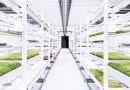 Podziemna farma położona 33 metry pod powierzchnią Londynu