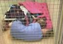 Pracownik schroniska wchodzi do klatki, aby pocieszyć porzuconego psa