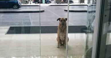 Zaadoptowała psa, który codziennie czekał na nią przed hotelem